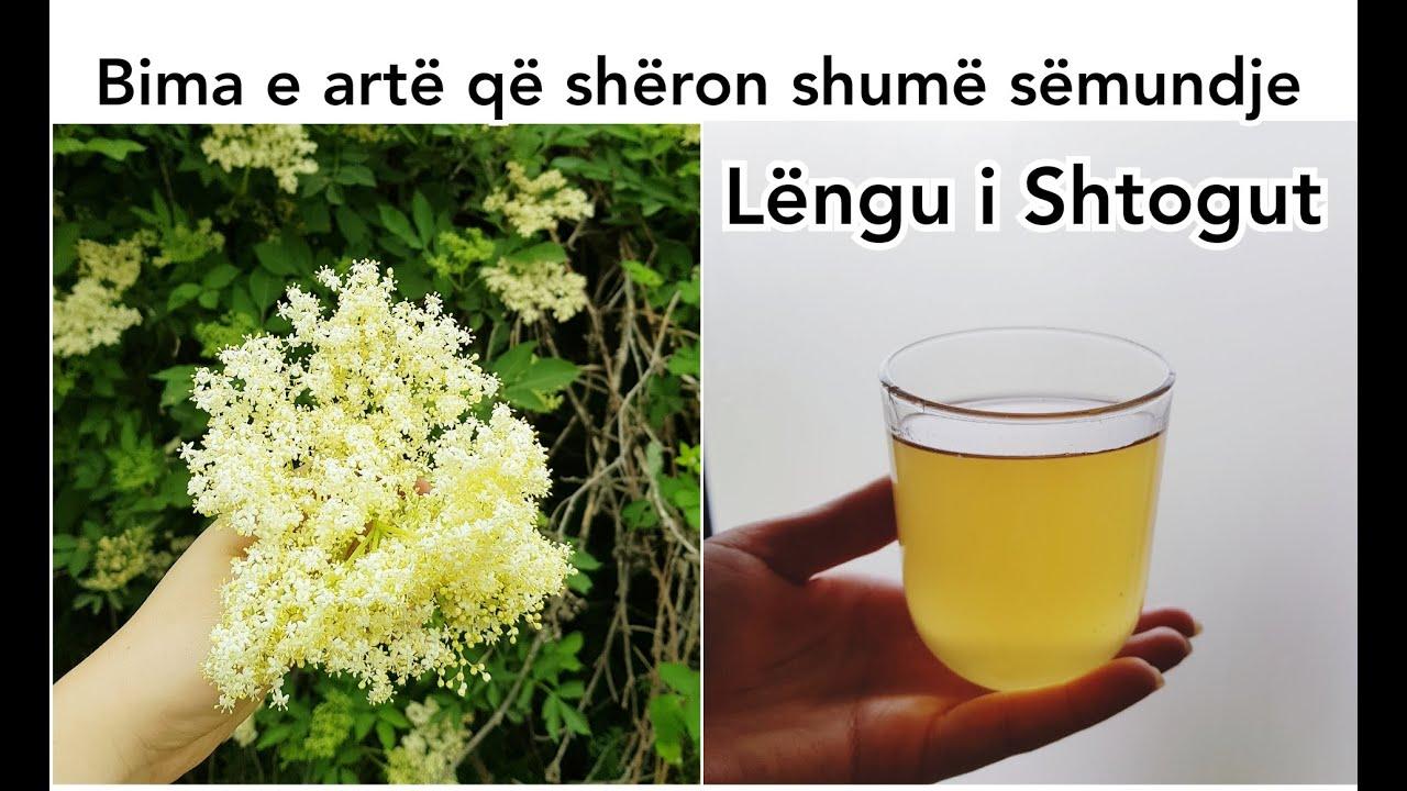 LENGU I SHTOGUT PER IMUNITET   Ilaq per SEMUNDJET   Receta e shurupit të shtogut   Elderflower syrup