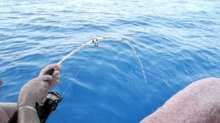 Рыбалка в Средиземном море. Шестижаберная акула - Big FISH.(В Средиземном море водятся 593 вида рыб, из них в водах Туниса обитает 291 вид (скумбрии, сельди, кефали, тунцы,..., 2012-11-30T18:26:50.000Z)