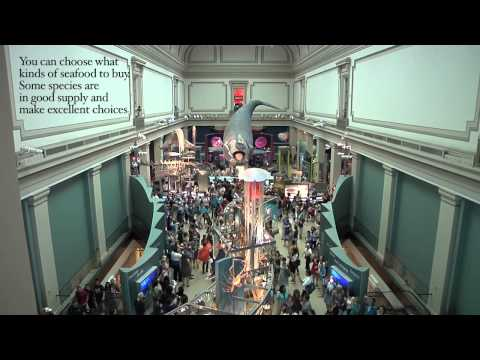 NMNH Turns Into Grand Central Station With Flash Mob