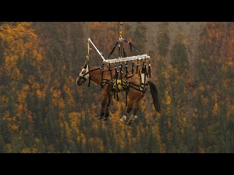One Drastic Rescue for Lucky the Horse