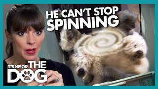 What Is Causing This Dog To Keep Spinning? |  It's Me or The Dog