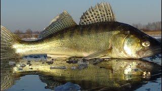Первый лед на Рузском водохранилище 12 12 20 Лещ судак окунь Рыбалка на чертика и безмотылку
