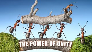Power of Unity