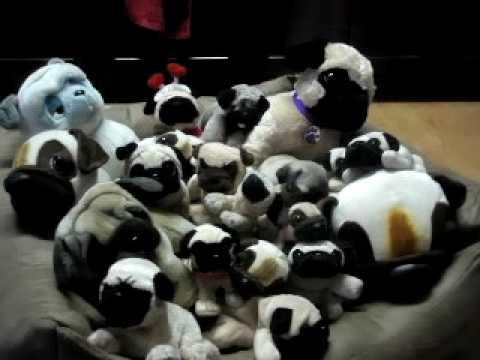 baby pug sleeping with toys