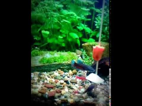 Feeding the fish with vegetables potato carrot youtube for What vegetables go with fish