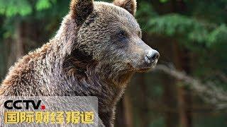 [国际财经报道]俄罗斯:男子欲与熊玩耍 险遭攻击  CCTV财经