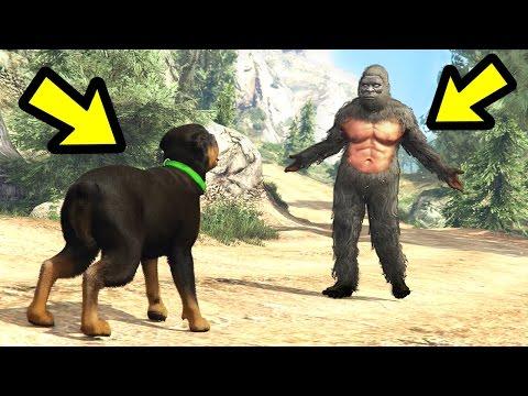GTA 5 - Chop vs. Bigfoot! (Who Wins?)