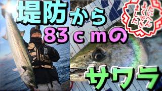 堤防からジグで巨大サワラが釣れた!ライトショアジギング thumbnail