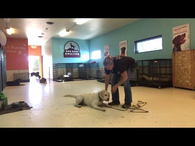 Dog Gone Amazing teaches a Down