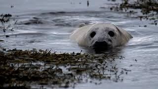 Ep 3: Grey seals - Life's a beach!