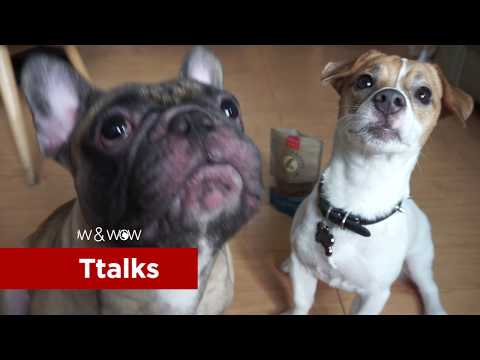 Teaching Dog Tricks with Cloud Star's Tricky Trainers