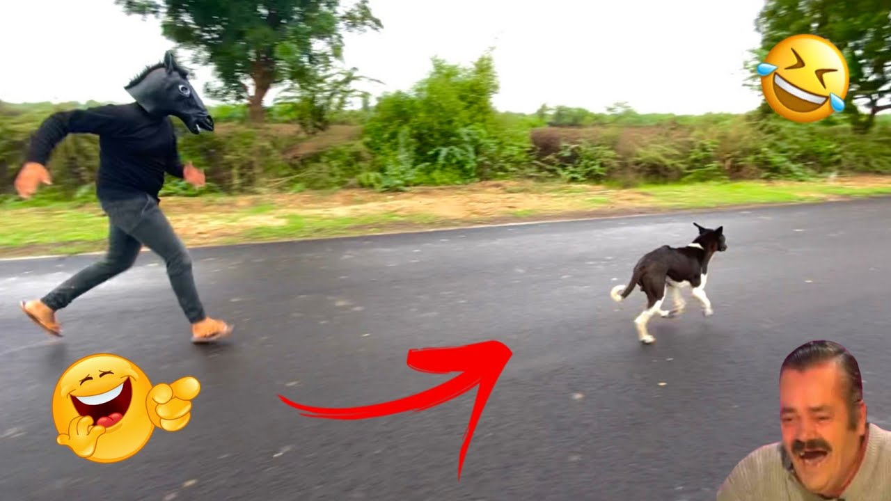 Fake small gorilla vs dog prank funniest dogs scared try to not laugh boom fun tv