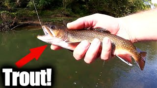 Trout Fishing with PowerBait Dough! What Kind of Trout did I Catch?