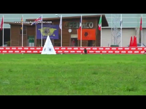 IFR 2013 - IPO World Championship ( Part One )