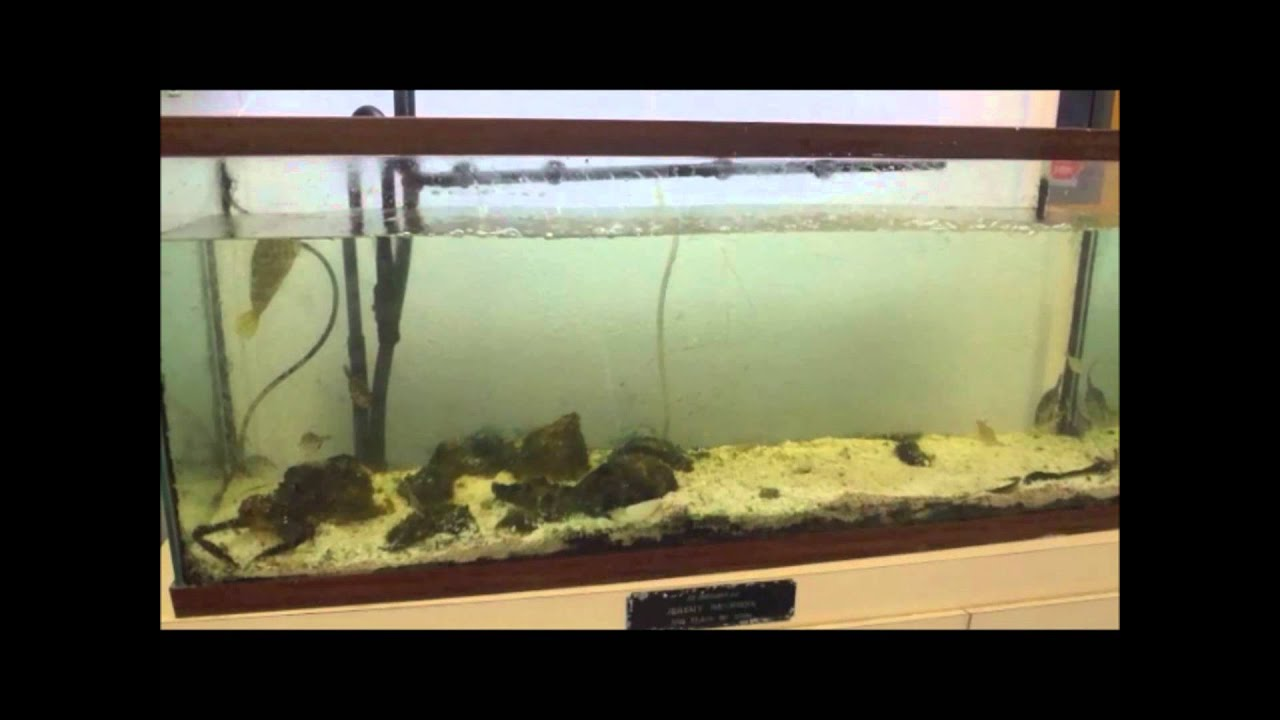 Freshwater fish tank upkeep - Estuaries Program Fish Tank Upkeep