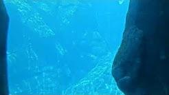 Georgia Aquarium - Beluga Web Cam