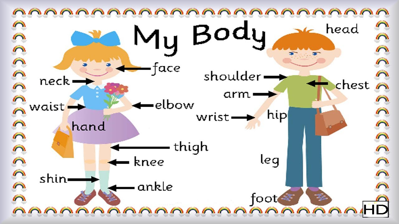 worksheet Learning For Kids learning for kids laptuoso let us know our body external fun n learn kids