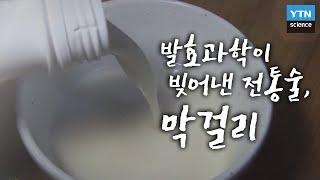 한국사 探 발효과학이 빚어낸 전통술 '막걸리'  YTN…