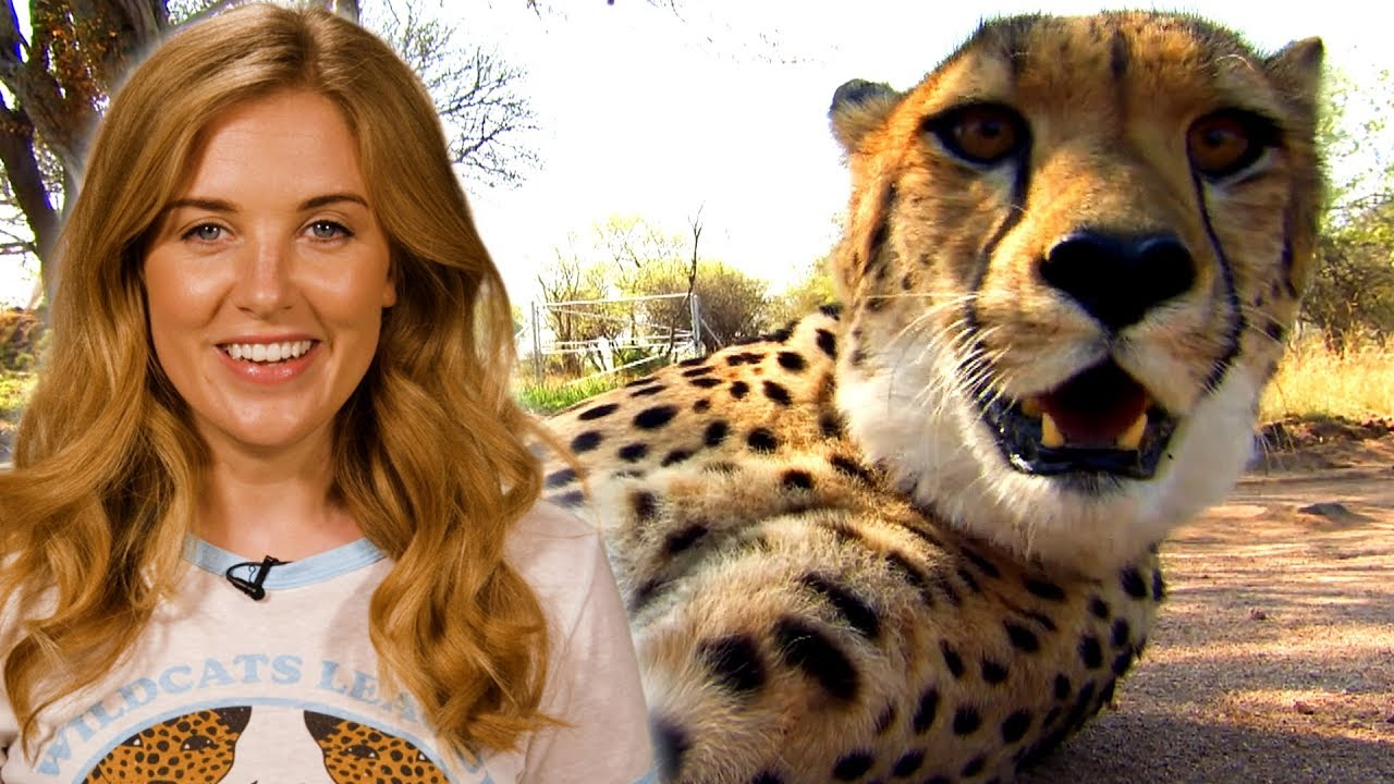 Why are Cheetahs the Fastest Animal on Land? | Earth Unplugged