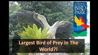 Kings of The Skies - Largest Bird of Prey in The World!