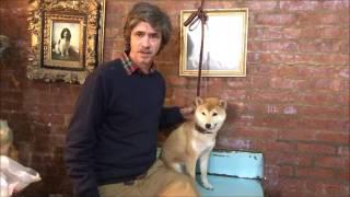 Shiba Inu Retriever Training, How to teach Dog to hold object