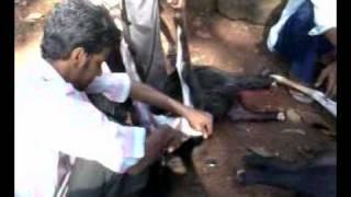 Someshwar Ratnagiri-Kurbaani By Mazher Bhai.3gp