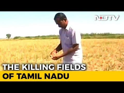 In Drought-Hit Tamil Nadu, Farmer Distress On A High