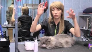 Все О Домашних Животных: Старый Кот - Немного Забот