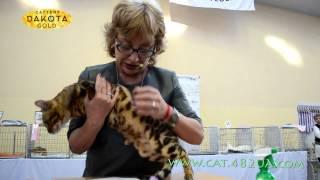 Международная выставка кошек, Харьков, 5 марта 2017, ринг часть 2