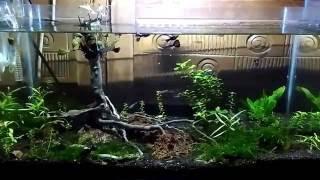 Aquascape Indonesia Jawa Tengah Pati Tayu cocok untuk di kamar ruang tamu teman melepas lelah