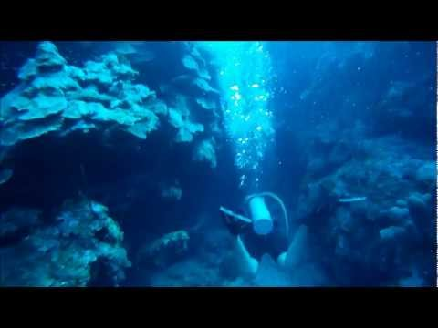 Grand Cayman Scuba Diving Highlights from a 2 tank dive