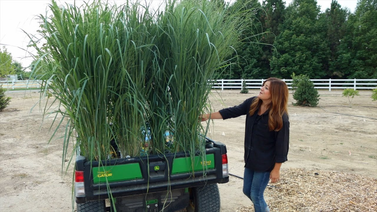 Planting the Most Glorious Ornamental Grasses!!! 😍🌾💚 // Garden Answer