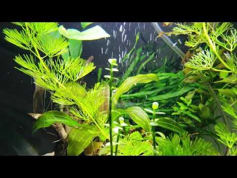 Planted fresh water globe aquarium escape