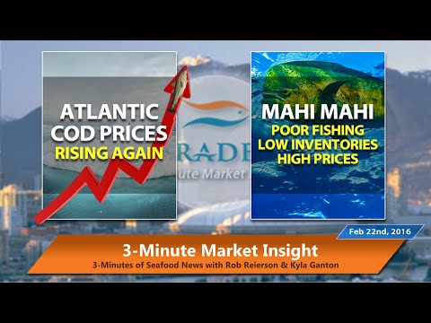 3MMI - Atlantic Cod Prices Rise AGAIN; Poor Mahi Mahi Fishing Keeps Prices Peaked