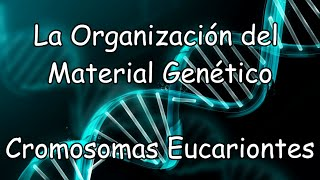 La Organización del Material Genético - Cromosomas Eucariontes