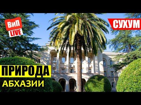 Сухум   Абхазия, ботанический сад, бамбуковая роща, обезьяний питомник, морской и жд вокзал
