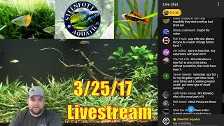 Die off in the Fishroom - Tropical Fish and Aquarium Live stream
