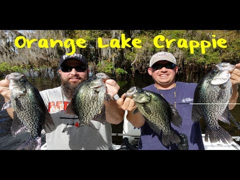 Crappie Fishing Florida's Orange Lake