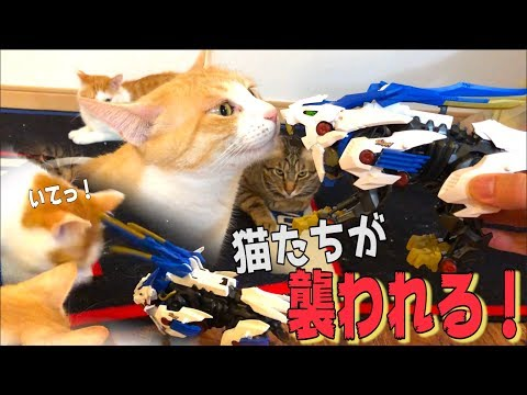 Zoids attacked the cats!