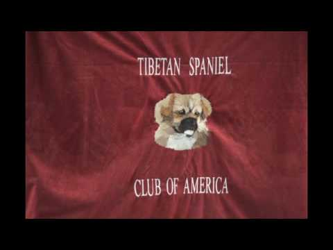 2016 Tibetan Spaniel Club of America National Show