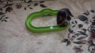 Американские игрушки для котёнка Сони