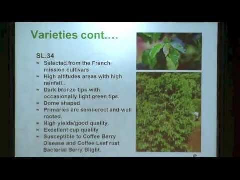 NBC2012 - Peter Kimata: Agronomy of Kenyan Coffee