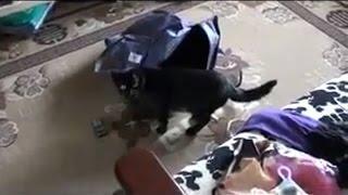 Кот вылетел из сумки
