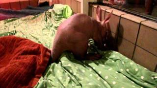 Aardvark baby potty-ing