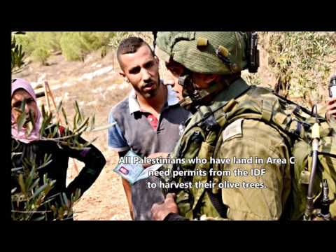 Palestine Olive Harvest 2016