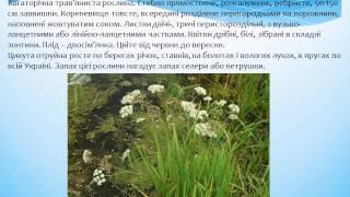 Отруйні рослини, гриби    та тварини Буковини