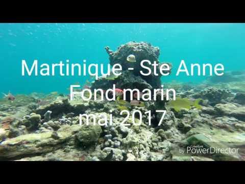 Martinique - Ste Anne - fonds marins