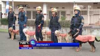 Net12 - Jakarta Rescue, Anjing Pelacak