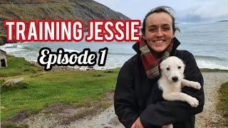 EP. 1 TRAINING JESSIE  My new series on training a sheepdog puppy