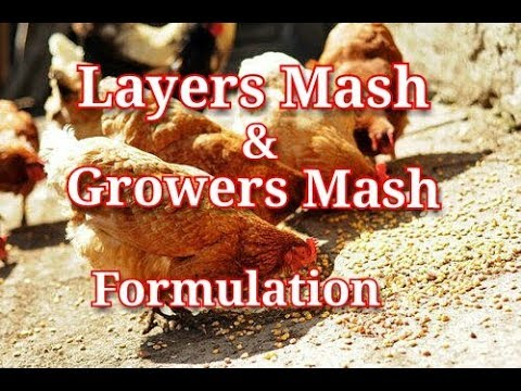 How To Make Layers Mash And Growers Mash For Chicken